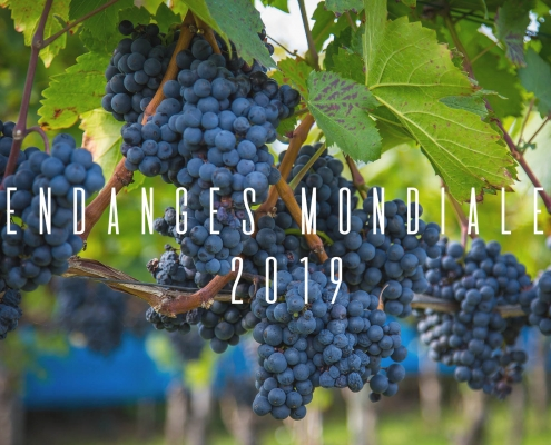 Production mondiale raisin 2019